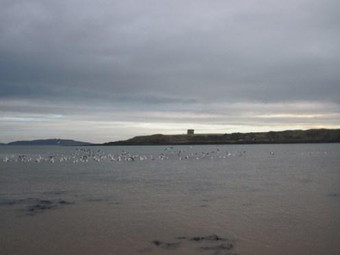 loughshinny beach (14)