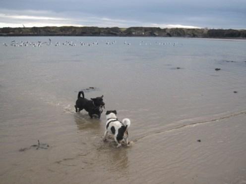 loughshinny beach (17)
