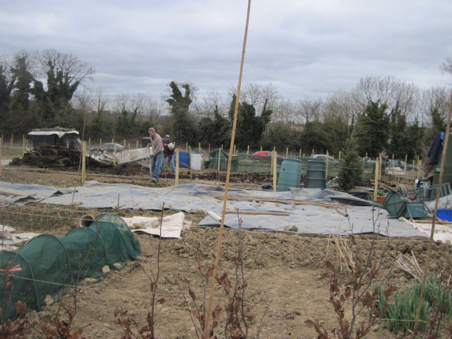 donabate allotments (11)