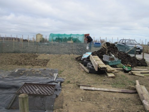 donabate allotments (16)