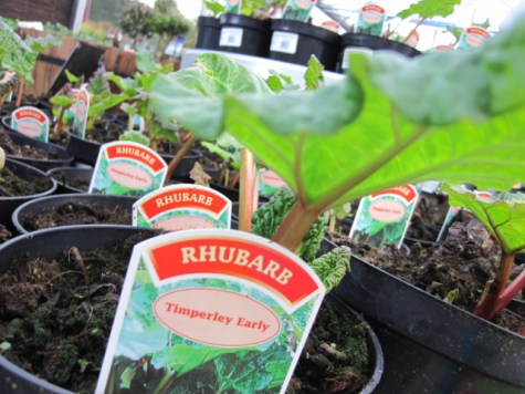 buy plants online ireland (1)