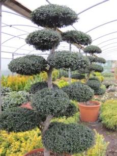 plants dublin