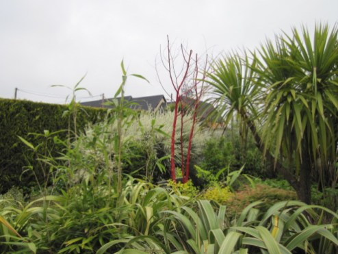 red dead tree (2)