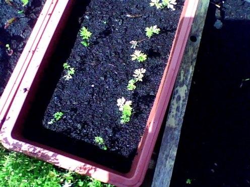 amateur gardening (1)