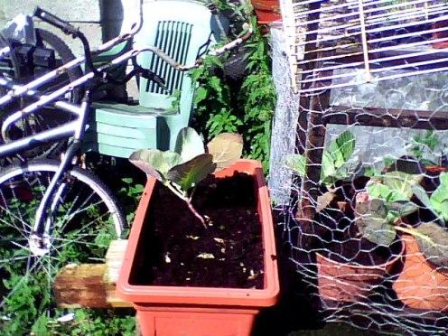 amateur gardening (3)