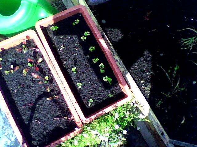 amateur gardening (4)