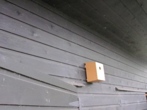 bird box (12)
