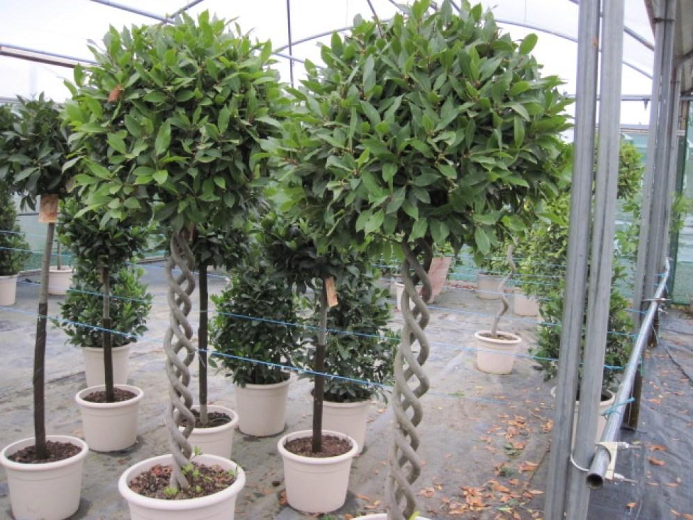 unusual instant plants
