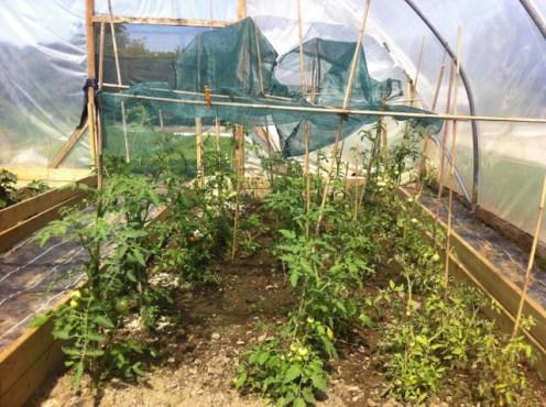 peter mcverry trust gardening (12)