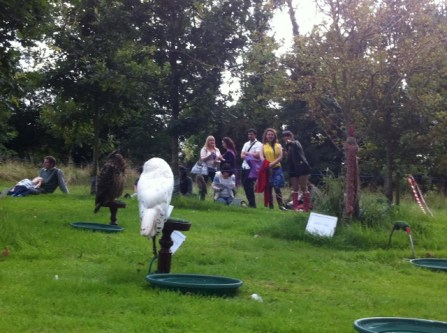 newgrange falconry - spirit of folk 2011 (1)