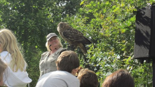 newgrange falconry - spirit of folk 2011 (10)