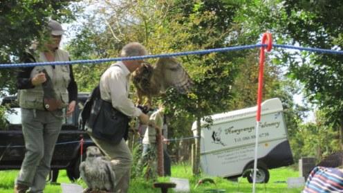 newgrange falconry - spirit of folk 2011 (13)