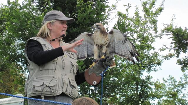 newgrange falconry spirit of folk 2011 festival