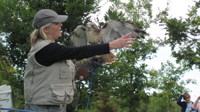 newgrange falconry - spirit of folk 2011 (19)