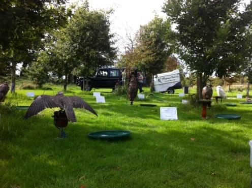 newgrange falconry - spirit of folk 2011 (23)