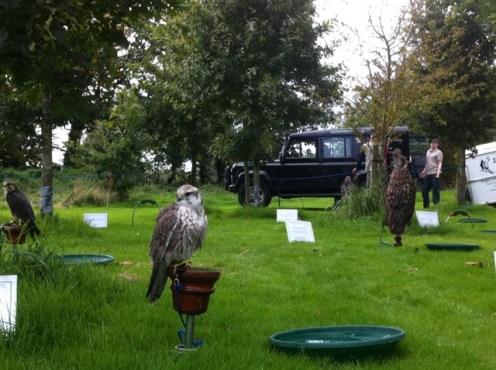 newgrange falconry - spirit of folk 2011 (24)