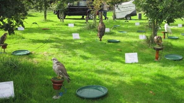 newgrange falconry - spirit of folk 2011 (3)