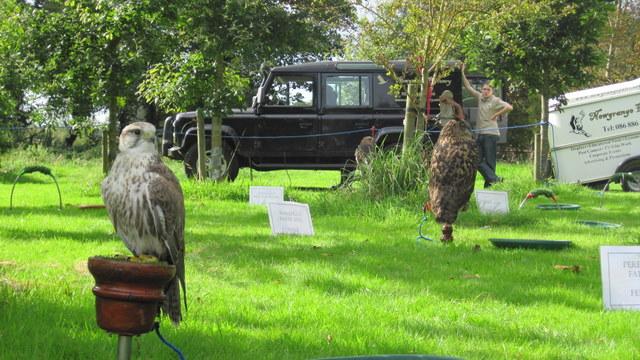 newgrange falconry - spirit of folk 2011 (4)
