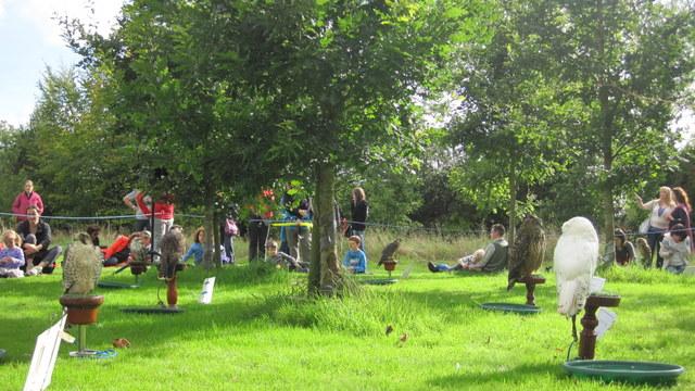 newgrange falconry - spirit of folk 2011 (5)
