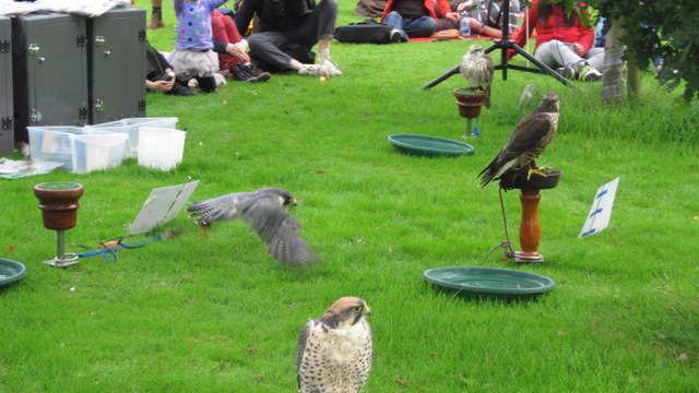 newgrange falconry - spirit of folk 2011 (6)