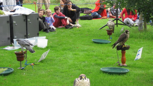 newgrange falconry - spirit of folk 2011 (7)