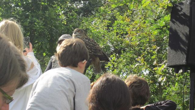 newgrange falconry - spirit of folk 2011 (9)