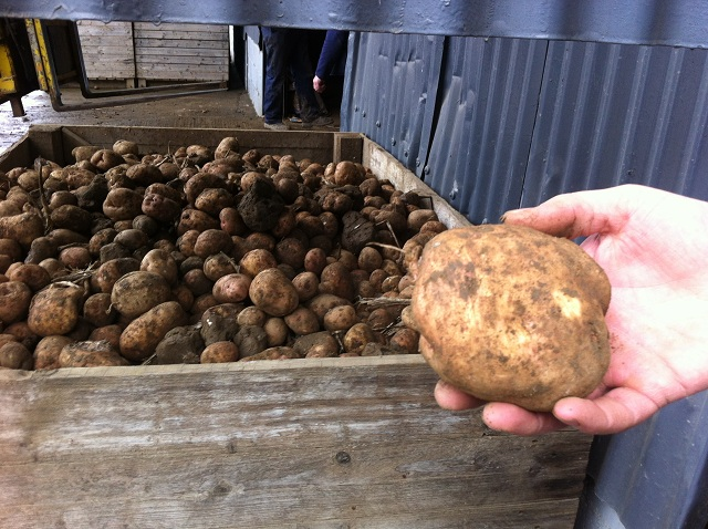 rodgers potato grower 7