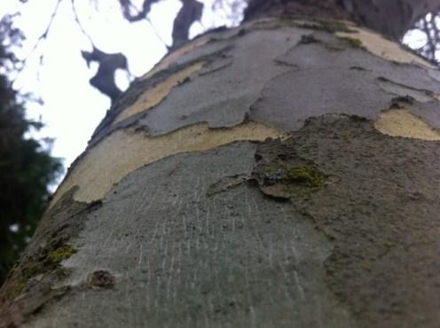 tree bark (1)