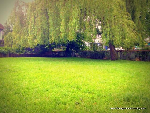 trees lucan park