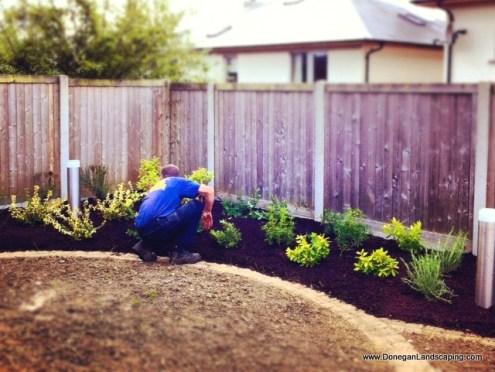 garden planting dublin