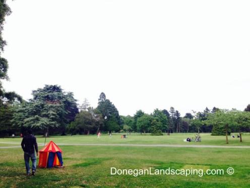 phoenix park trees (2)