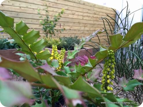 donegan landscaping dublin, back garden (10)