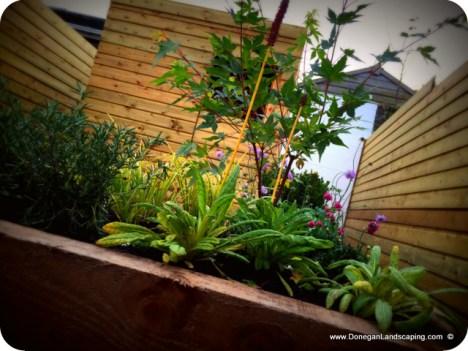 donegan landscaping dublin, back garden (7)