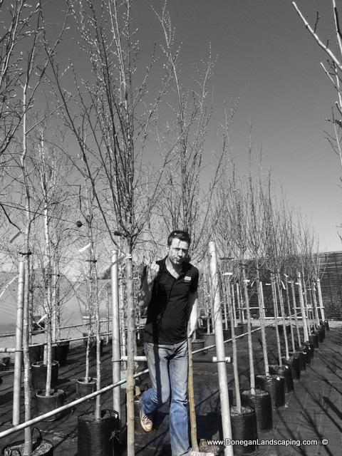 tree planting dublin, donegan (8)