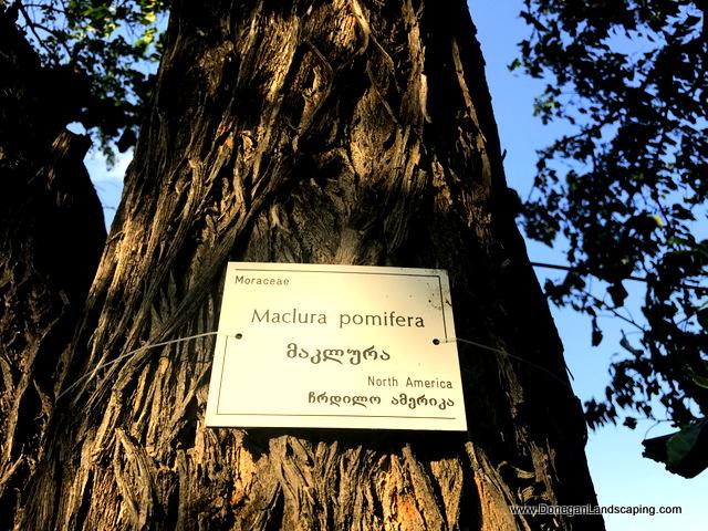 National Botanic Garden of Georgia (7)
