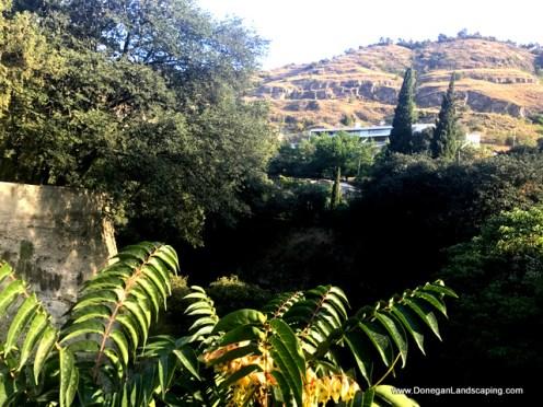 National Botanic Garden of Georgia (8)