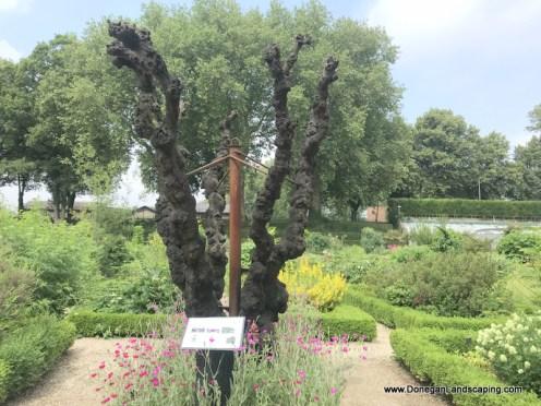 Jardin des Plantes, Amiens (4)