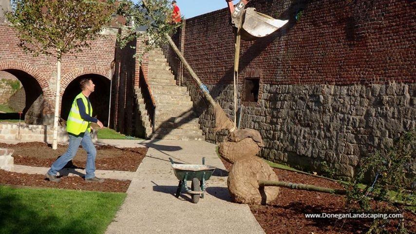 trees, jardin de la paix, historial, donegan