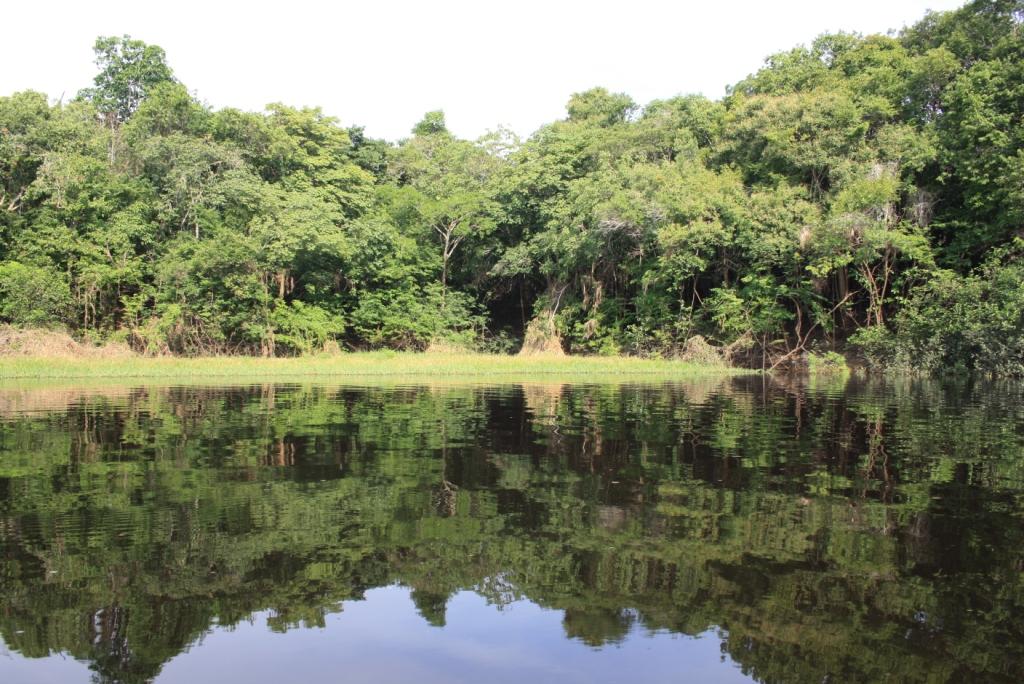 la selva i el riu