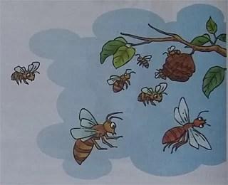 Cerita Legenda Rakyat Yunani Lebah Pekerja dan Lebah Jantan