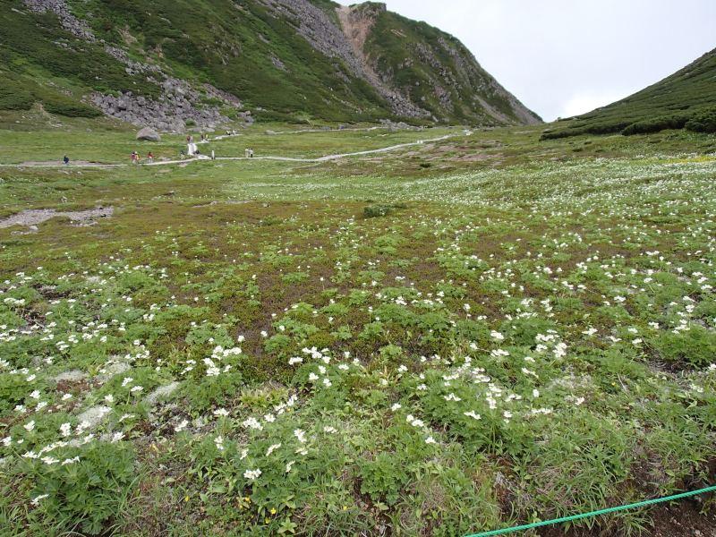 乗鞍岳の花畑
