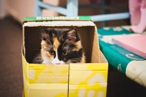 cica dobozban