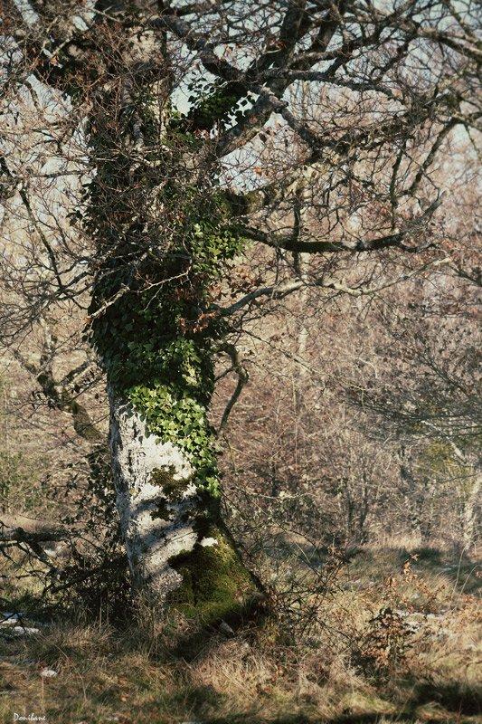 tree, magic, forest, nature, donibane, mikeldi, arbol
