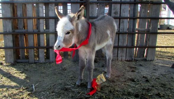 donkeys 028