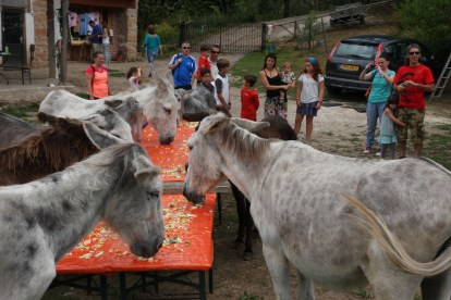 Donkeys and visitors together