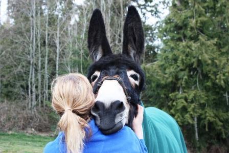 Living On Donkey Time