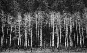 20140198D Aspens No. 2, Alto, NM, 2014