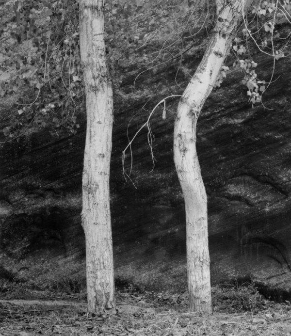 84003 Two Trees, AZ 1984