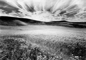 97115 Wheatfield, Approaching Sundown, WA 1997