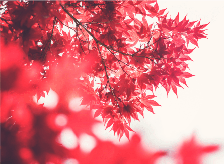red leaves.png